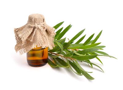 Teebaumöl bei Lippenherpes